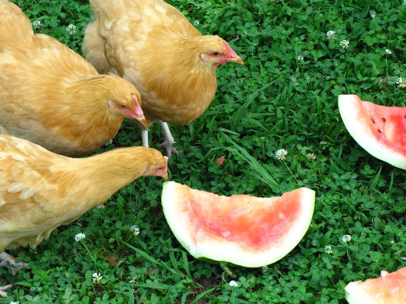 Watermelon 026