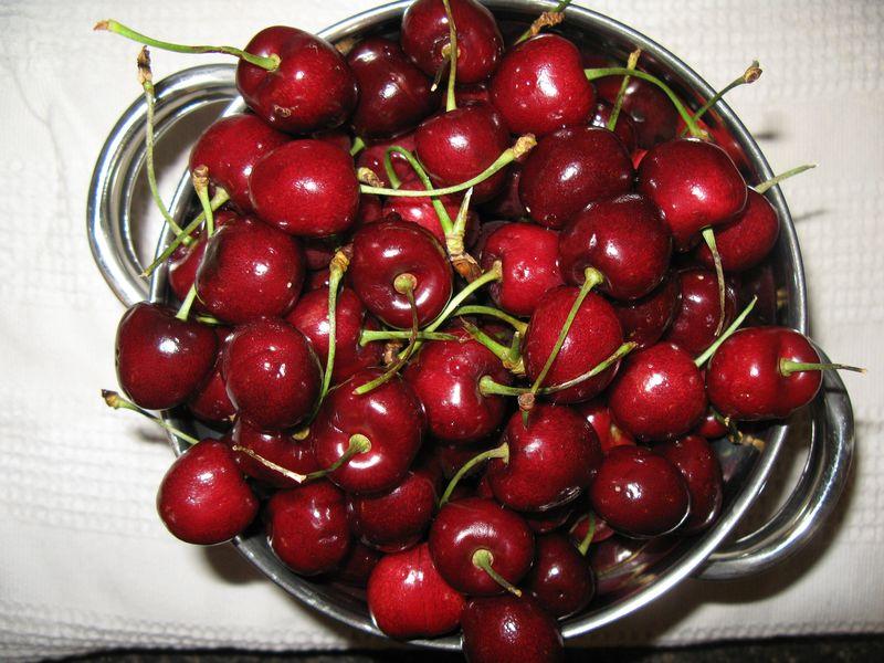 Cherry,dogs,br 001
